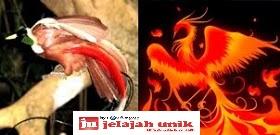 6 Hewan Langka Dari Indonesia Yang Mirip dengan Hewan Mitologi