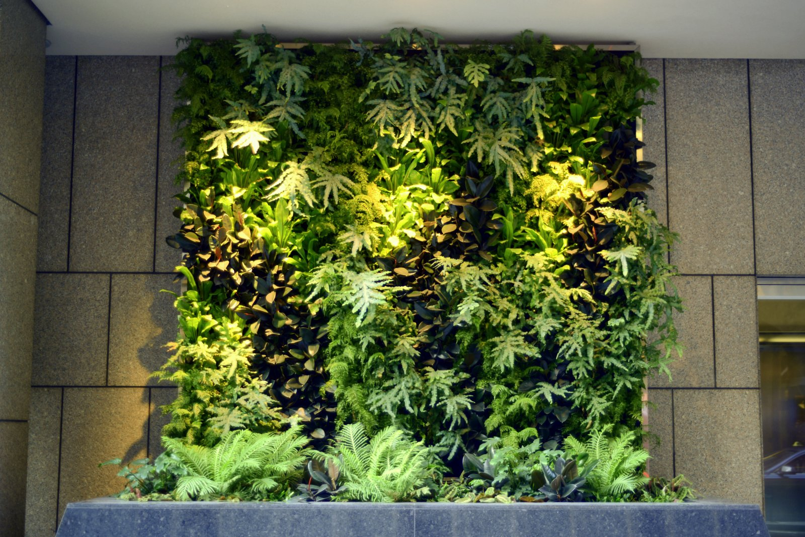 Plants on walls vertical garden systems 6 months mature for Vertical garden designs