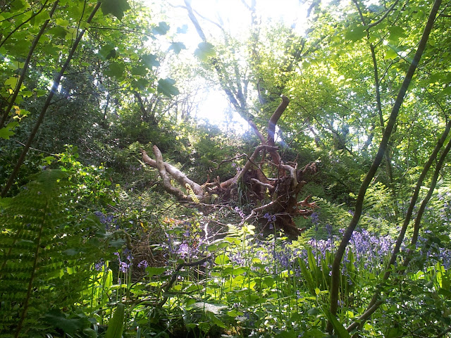 Castle Pill Woods Enchanted Forest Trees Fairies Angels Wings Butterflies Peter Pan Paddling