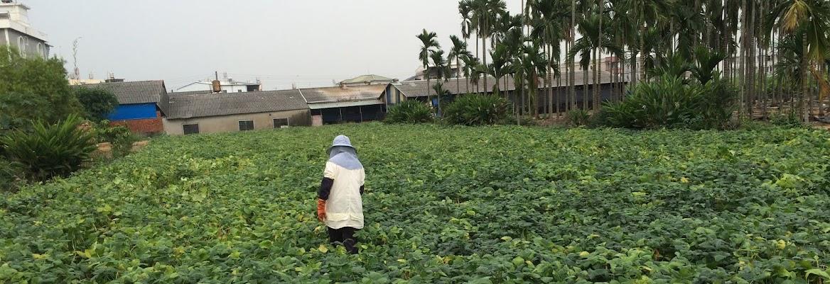 【育聖園地】台灣在地農產品:萬丹紅豆、檸檬、韓式泡菜、木瓜、蝶豆花、蓮霧 直接向農民購買