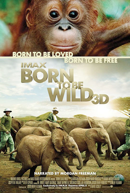 into the wild a synopsis Based on the story of irish landscape designer mary reynolds competing at  chelsea in 2002, this outsider movie undermines its eco message.