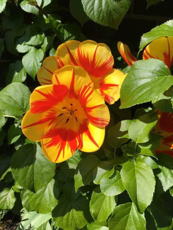 Eastertide Garden Glory