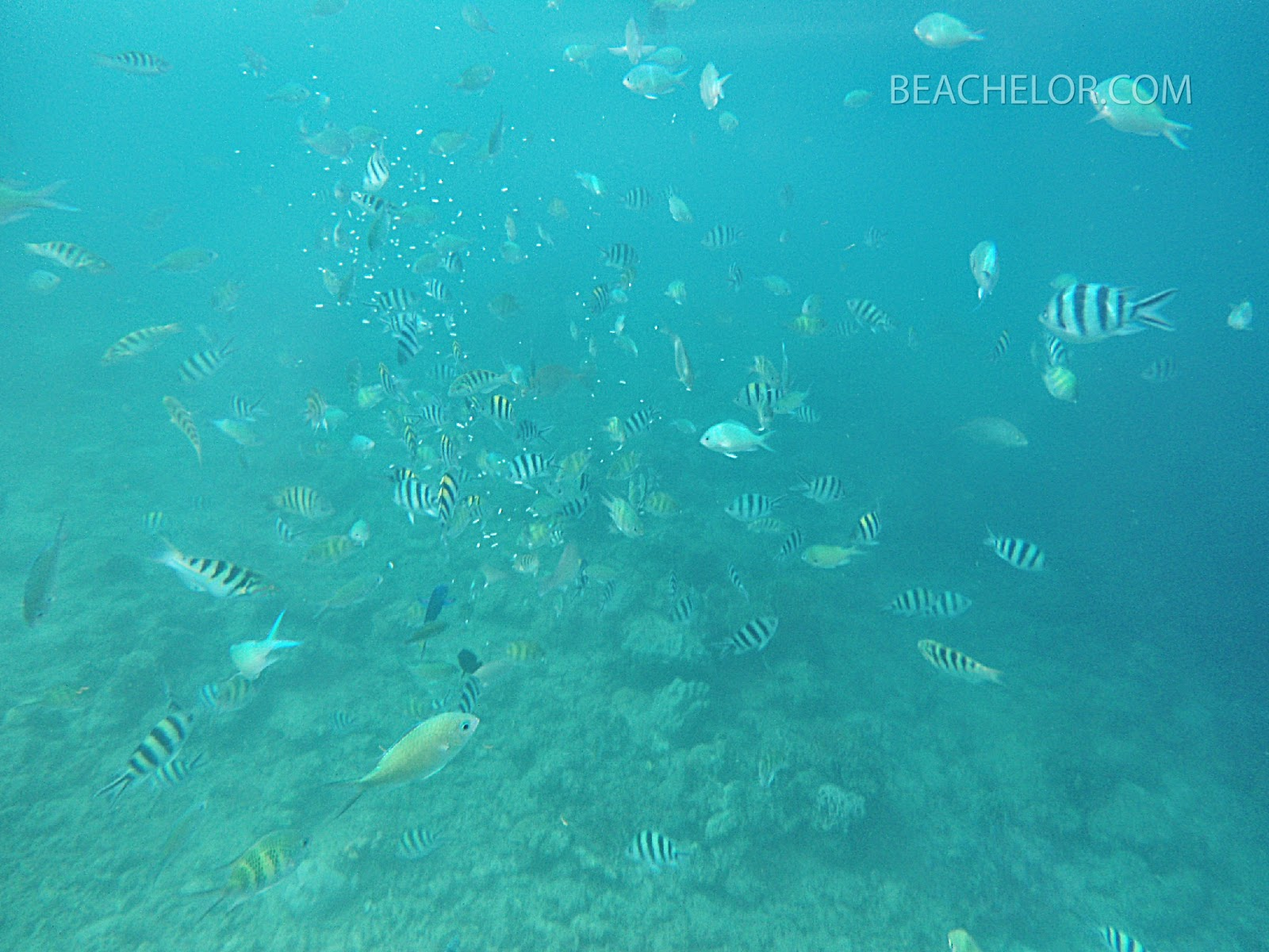 snorkeling in hundred islands alaminos
