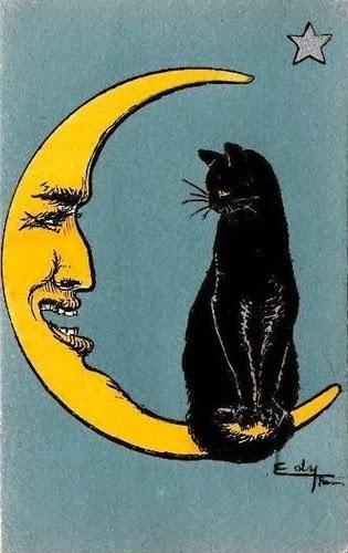 luna y gato