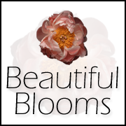 Beautiful Blooms Blog Button