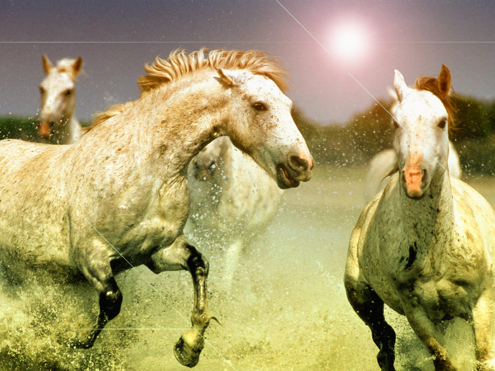 Good   Wallpaper Horse Abstract - abstract+horses+hd+wallpapers+1  Perfect Image Reference_381134.jpg