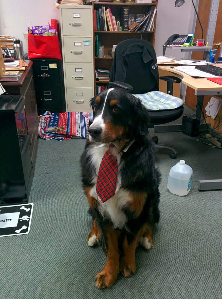 Cute dogs (50 pics), dog pictures, dog wears tie