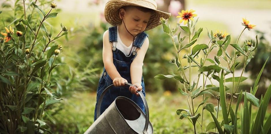 Borhy Kertészet