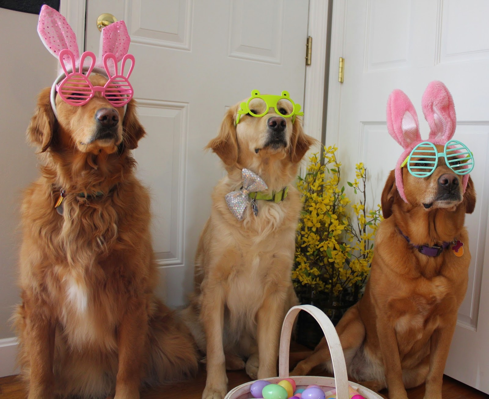 dogs dressed up for Easter