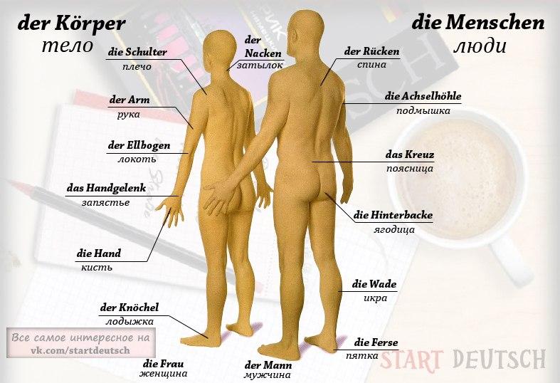 Фразы на немецком для секса