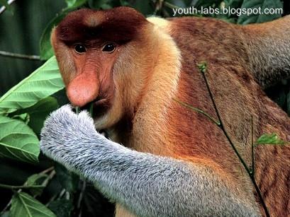 Hewan-hewan Langka di Indonesia - youth-labs