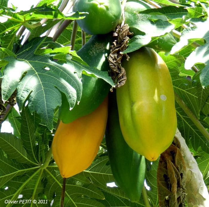 VILLERS-LES-NANCY (54) - Les serres du jardin botanique du Montet-Papayes