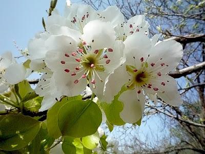 imagen primavera+flores