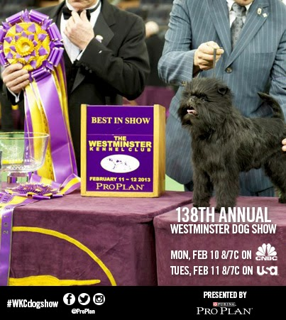 Westminster Dog Show Tv Viewing