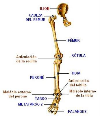 Del escleroplástico de las venas en los pies que esto