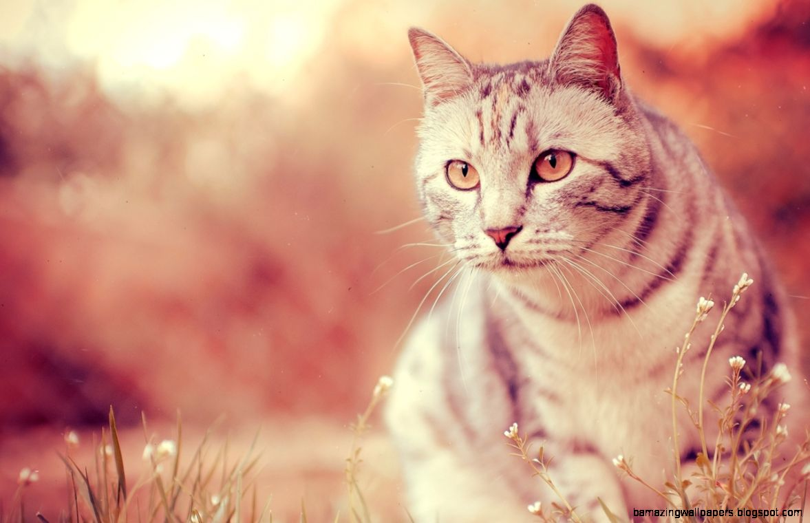 cool cat wallpaper desktop amazing wallpapers