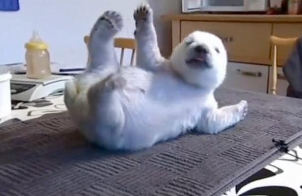 http://3.bp.blogspot.com/-WXg-T-ApYfU/Tv1WQCmjORI/AAAAAAACmbY/XcEvgT61qSQ/s1600/siku-the-cute-orphan-danish-polar-bear.jpg