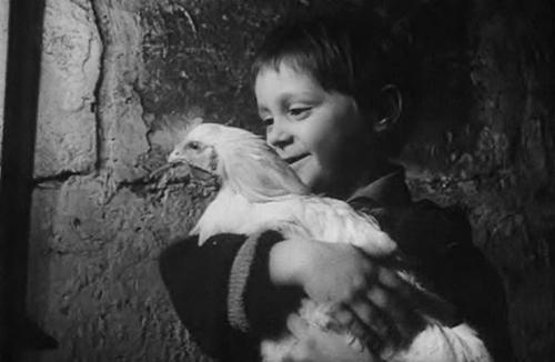 the chicken le poulet