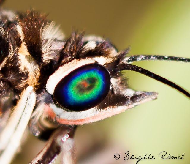 tropique du papillon, serre à papillons, elne, 66