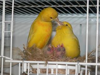 http://3.bp.blogspot.com/-WYHtggyHM_0/UPAXErTInpI/AAAAAAAAAAs/_BozRQFeTHU/s1600/canary.jpg