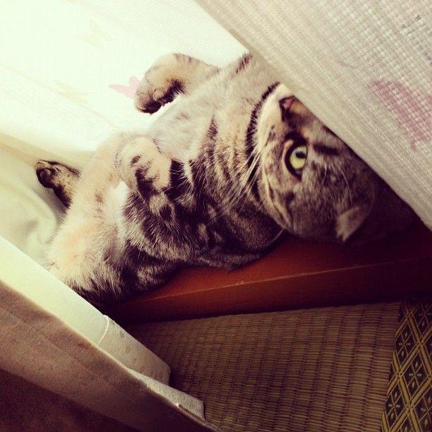 cat profile pictures