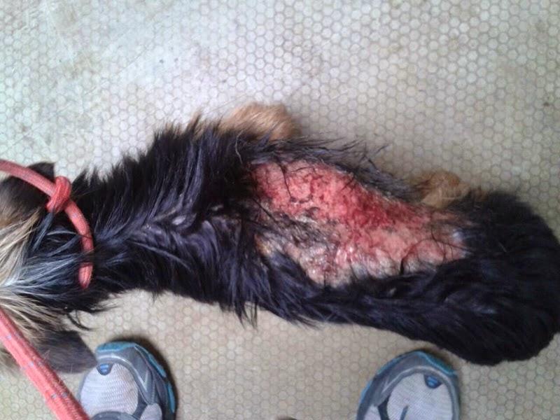 Bomberos rescatan perro quemado con ácido