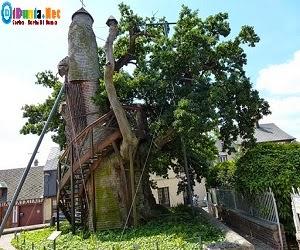 Pohon teraneh didunia