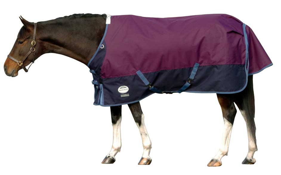 New Zealand Rug The Horse And Pony Project March 2016