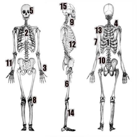 Partes del Esqueleto Humano en Inglés | Blog Para Aprender Ingles