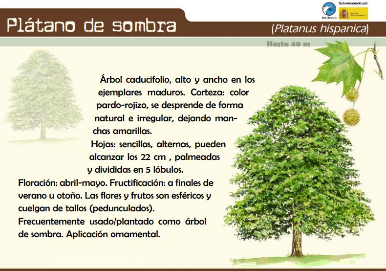 2 ciclo en la navata rboles y m s rboles for Investigacion de arboles