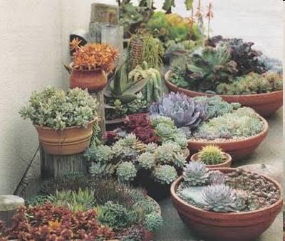Suculentas cactaceas y no cactaceas plantas de for Cactaceas y suculentas