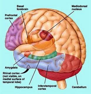 7 Tips Membuatkan Otak Berfikir Lebih Cepat