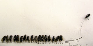 Funny Dead Insects Photos