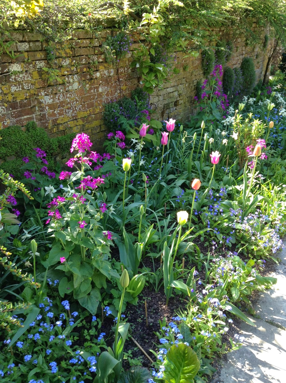 Myosotis, Tulipa and Lunaria annua in the Wall Garden, Great Dixter - Photo by Noemi Mercurelli