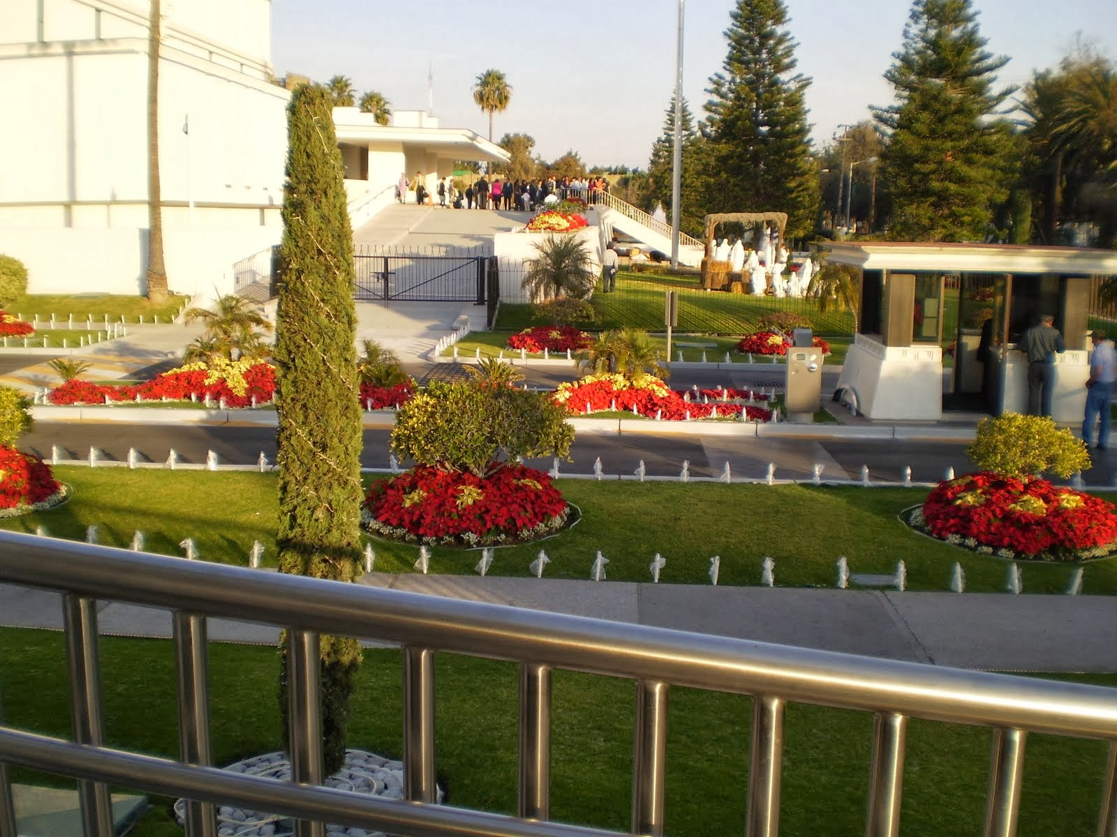 Poinsettias planted on the Mexico City L D S Temple Grounds