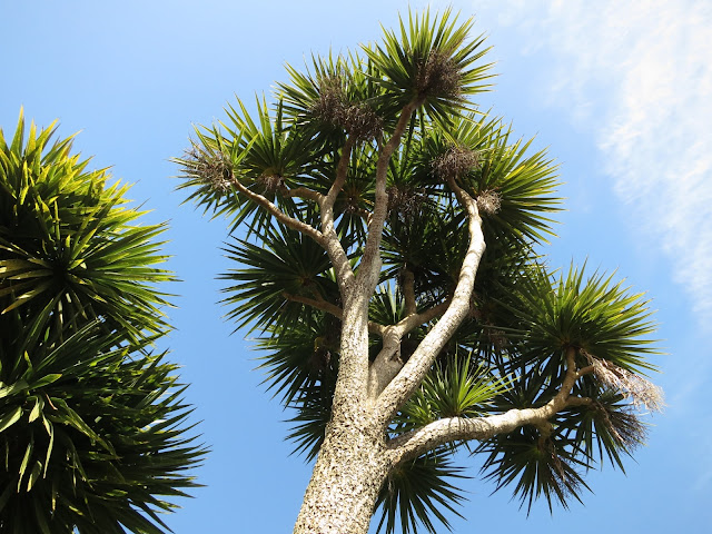Tops of palm-type tree. (May even be a palm tree - I don't know!)