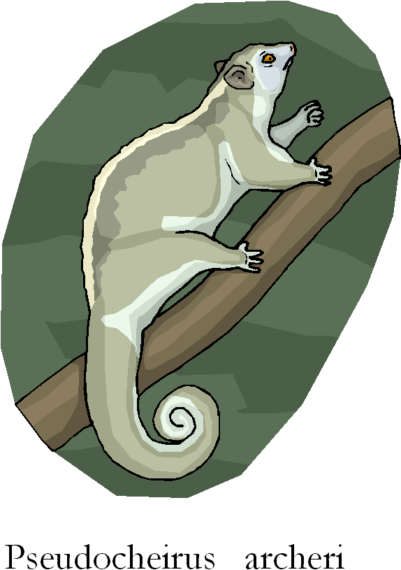 Green Ringtail Possum Pseudocheirus Archeri Free Clipart