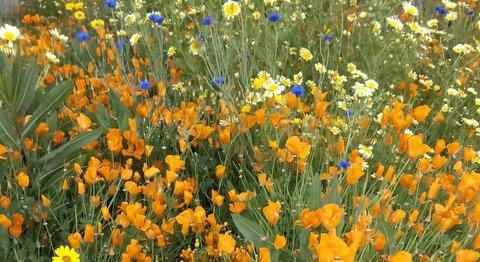 wildflowers, blurry