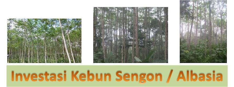 Investasi Sengon - Albasia - Jenjeng