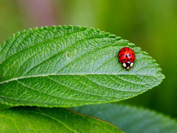 C mo proteger nuestro jard n de insectos durante todo el for Insectos del jardin