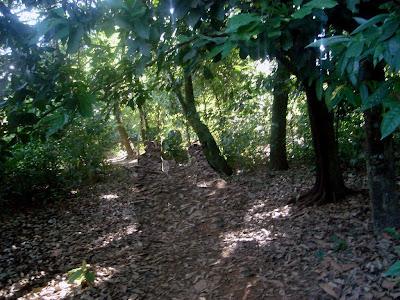 Macacos-prego do Parque Areião em Goiânia