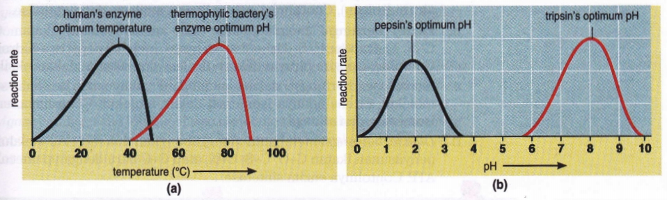 effect of ph and temperature on enzyme activity pdf