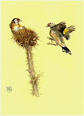 Goldfinches for Flow magazine.
