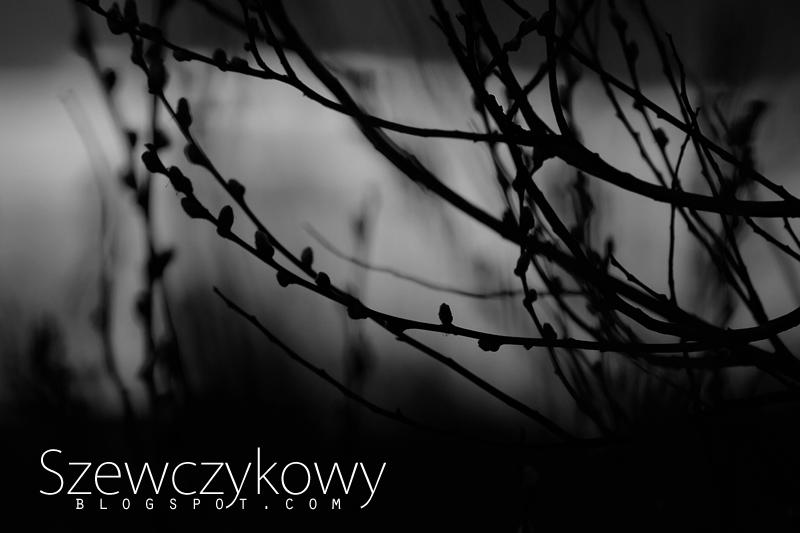 Kacper Szewczykowski fotografia.
