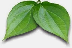 Manfaat daun sirih untuk kesehatan