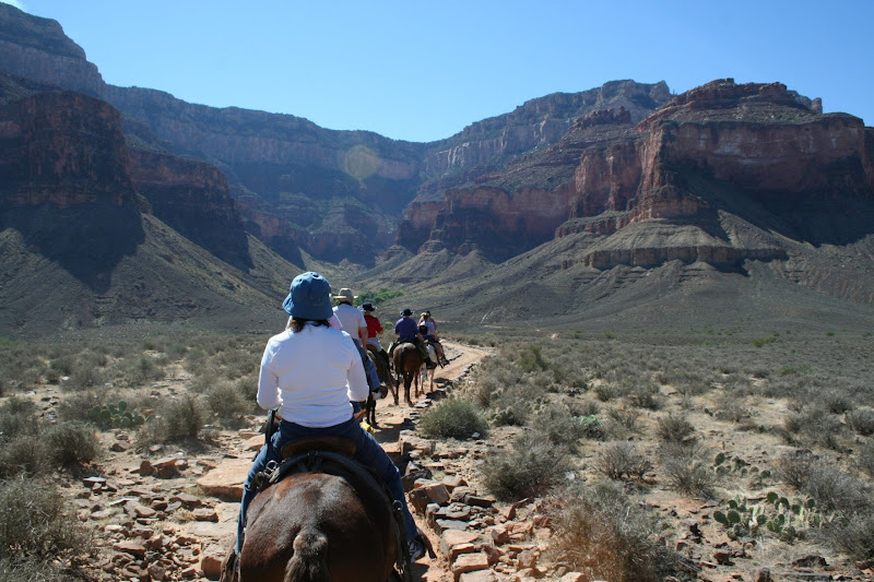 Grand Canyon Mule Ride Things to Do at the Grand Canyon