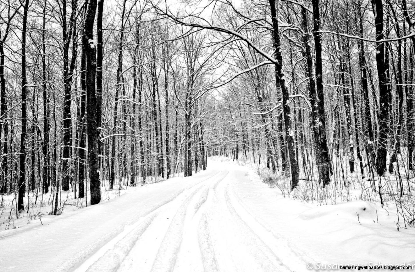 Black  White Photography Winter Landscape by SoulCenteredPhotoart