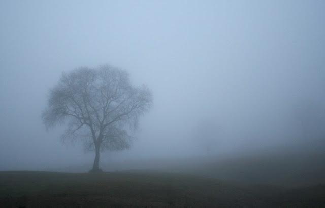 arbol-niebla