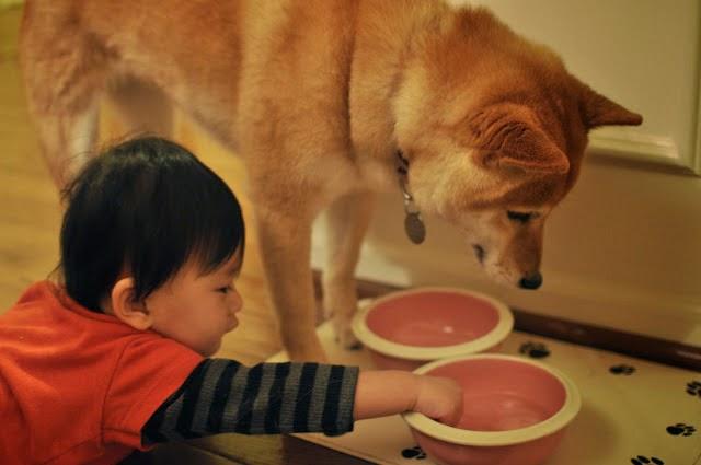http://photofun4u.com/babies-dogs