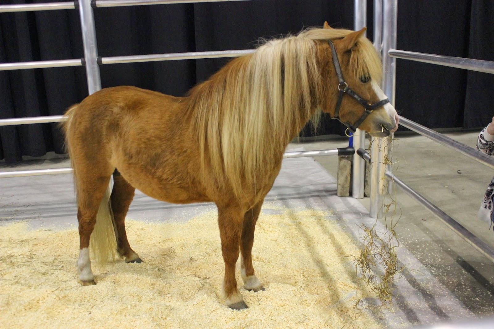 Syntynyt satulaan: Tampereen hevosmessut!